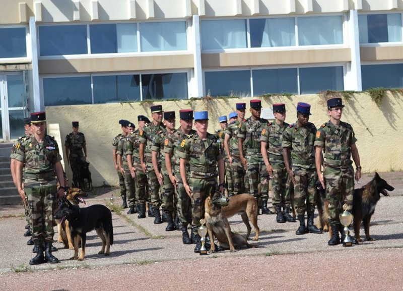 Animaux soldats - Page 5 724