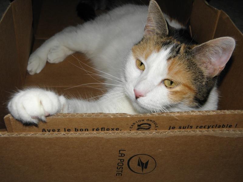 Havana, rebaptisée Chihiro, jolie tricolre environ 2 ans du côté de Limoges - Page 5 P7071622