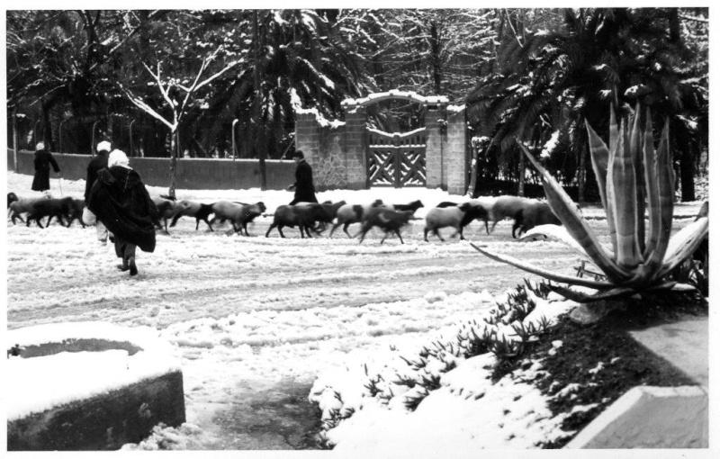 HIVER 1954 A SIDI BEL ABBES Img50810