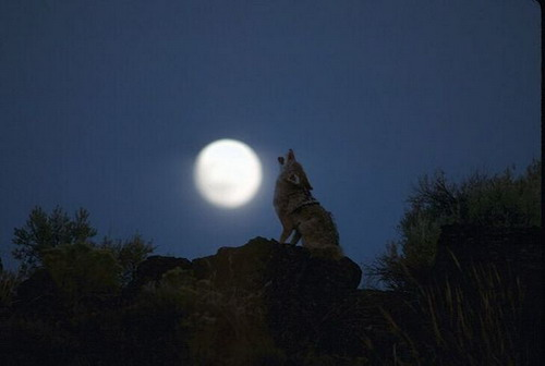 Bon Jeudi Lune10
