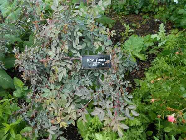Jardin botanique de Brooklyn Jbb1010