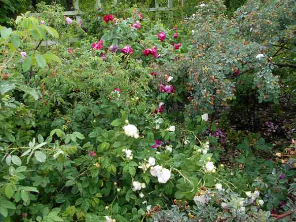 Jardin botanique de Brooklyn Jbb1110