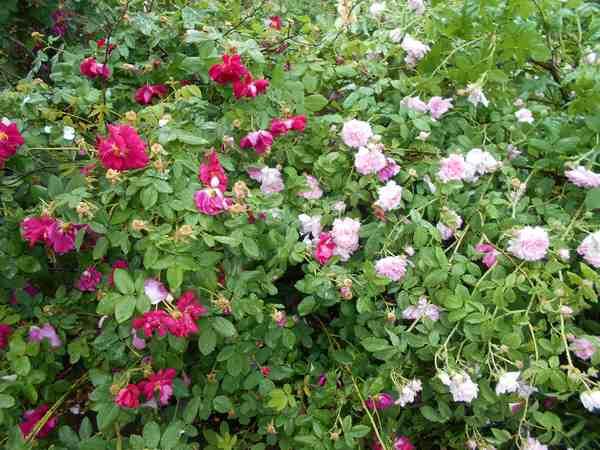 Jardin botanique de Brooklyn Jbb1210