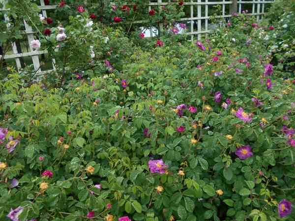 Jardin botanique de Brooklyn Jbb1510