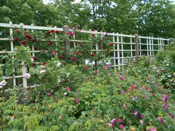 Jardin botanique de Brooklyn Jbb1710
