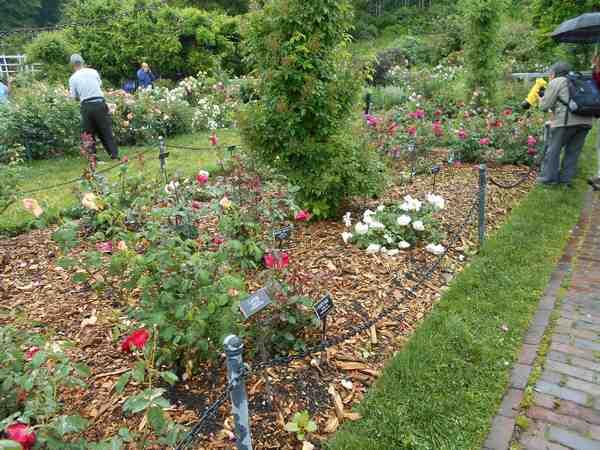 Jardin botanique de Brooklyn Jbb1810