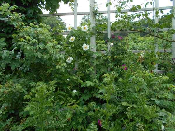 Jardin botanique de Brooklyn Jbb310