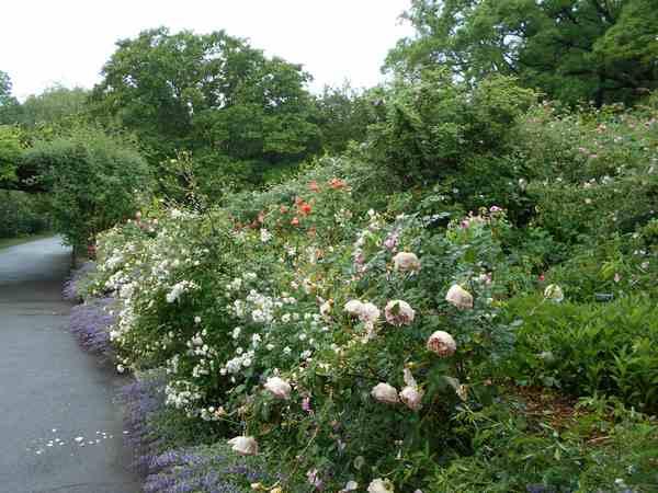 Jardin botanique de Brooklyn Jbb410