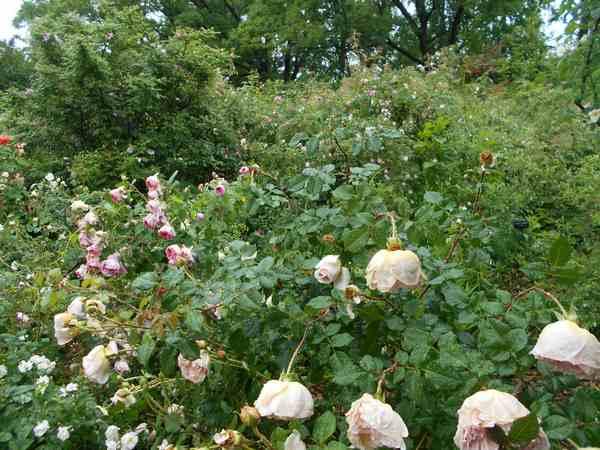 Jardin botanique de Brooklyn Jbb510