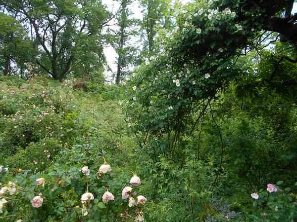 Jardin botanique de Brooklyn Jbb610