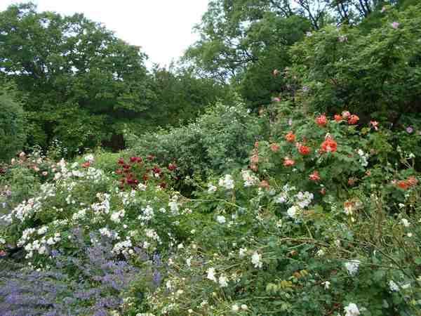 Jardin botanique de Brooklyn Jbb711