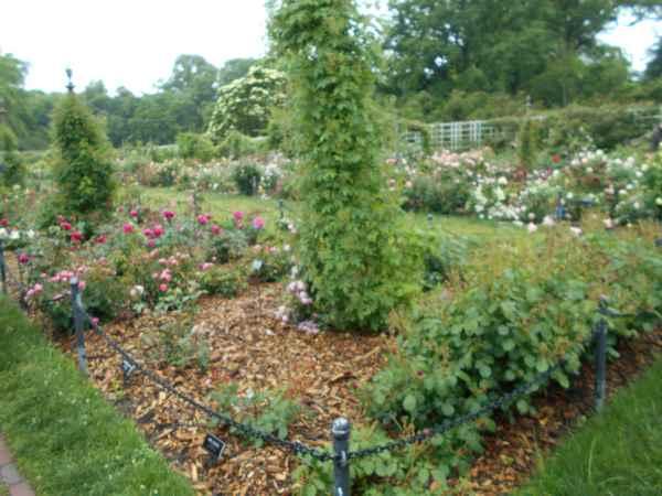 Jardin botanique de Brooklyn Jbb810