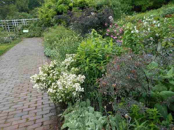 Jardin botanique de Brooklyn Jbb910