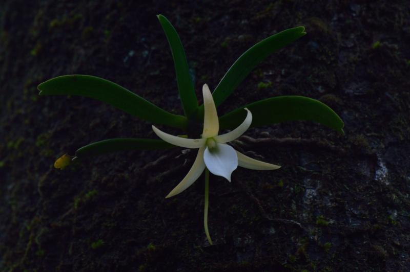 C'est la saison des liliodorum! Angrae13