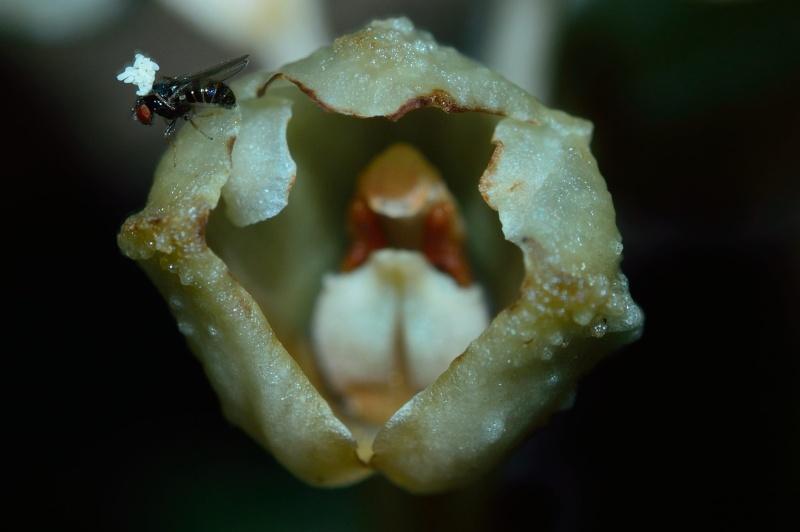 Et un pollinisateur, un! Gastro11