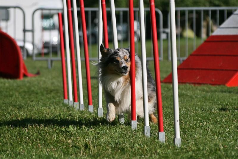 Concours d'agility à Chambéry  juillet 2012 Agil10