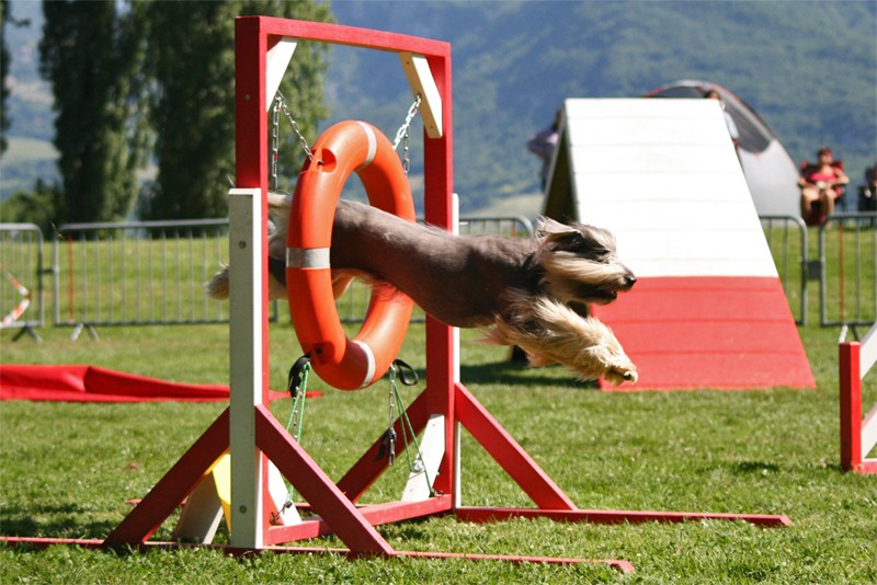 Concours d'agility à Chambéry  juillet 2012 Agil210