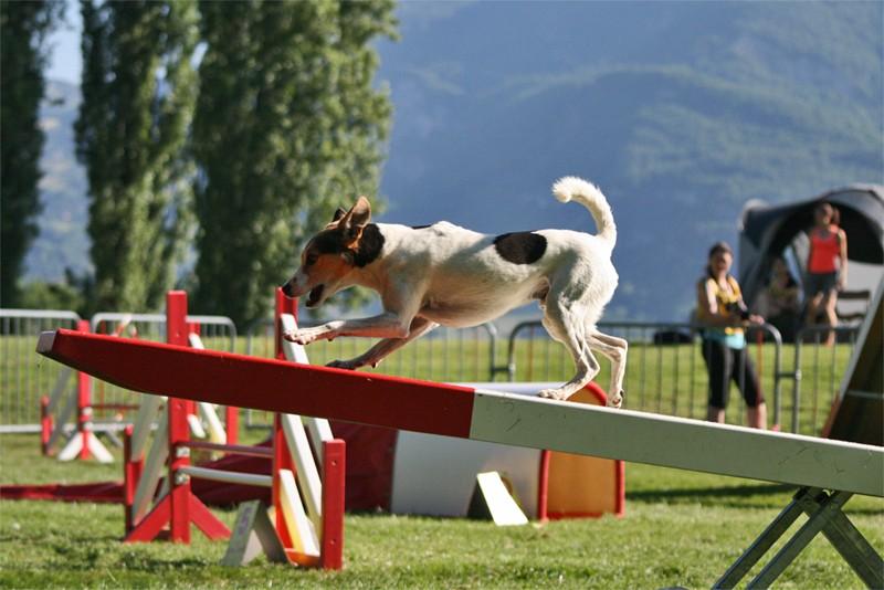 Concours d'agility à Chambéry  juillet 2012 Agil310