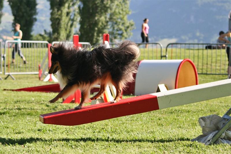 Concours d'agility à Chambéry  juillet 2012 Agil410