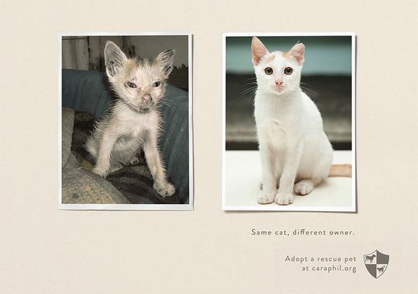 Les vidéos de Protection Animale Araphi10
