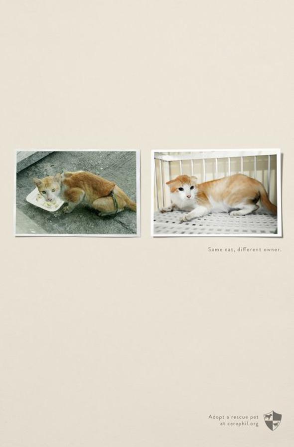 Les vidéos de Protection Animale Rescue11