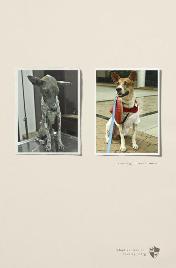 Les vidéos de Protection Animale Rescue12