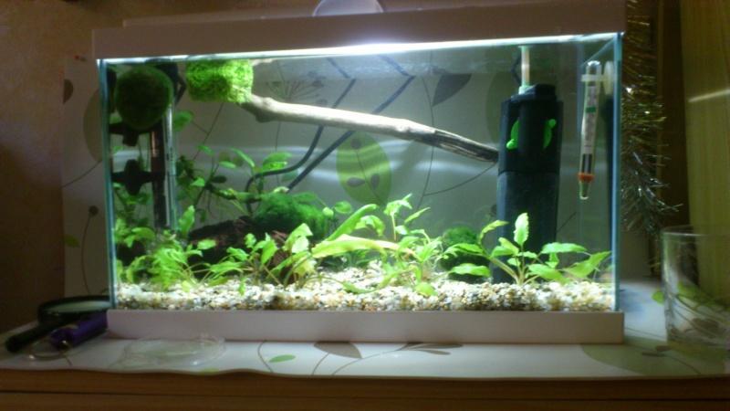 Aquarium 17 L Dsc_0510