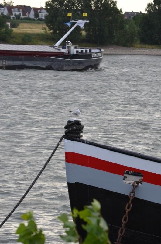 Der Rhein bei Mondorf am 22.07.2015 Dsc_0912