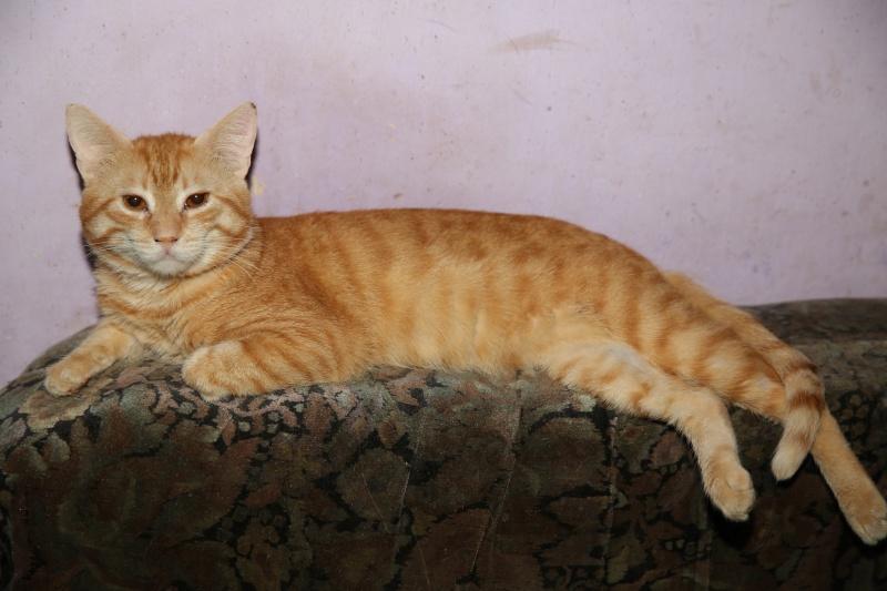 Parrainage des chats de Mme Angela Hx9a3510