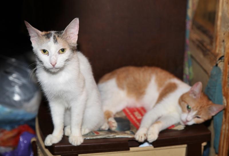 Parrainage des chats de Mme Angela Hx9a3511