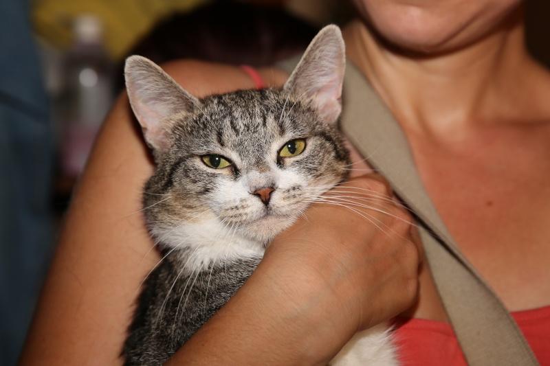 Parrainage des chats de Mme Angela Hx9a3512