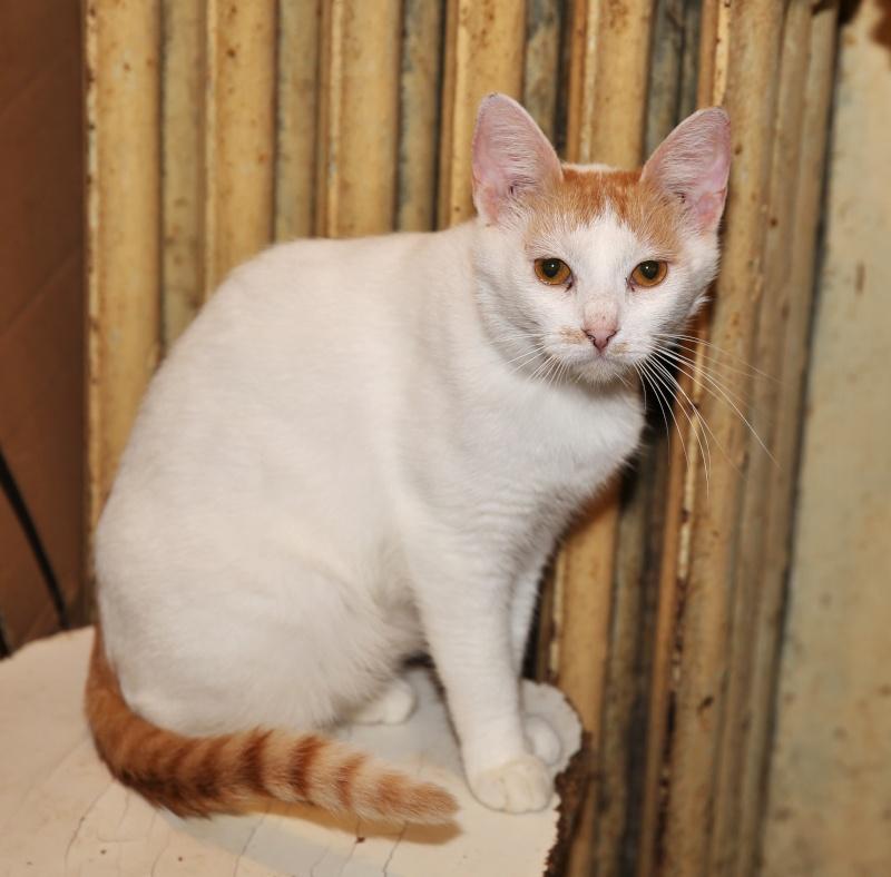 Parrainage des chats de Mme Angela Hx9a3514