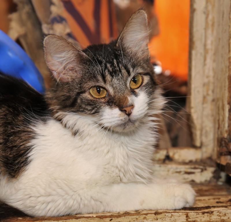 Parrainage des chats de Mme Angela Hx9a3515