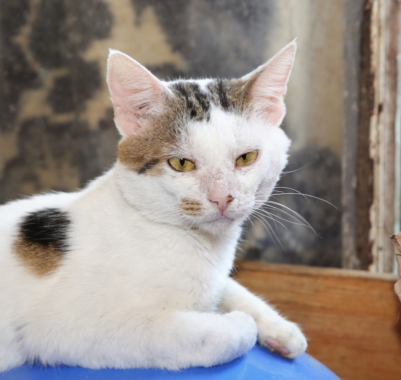 Parrainage des chats de Mme Angela Hx9a3516
