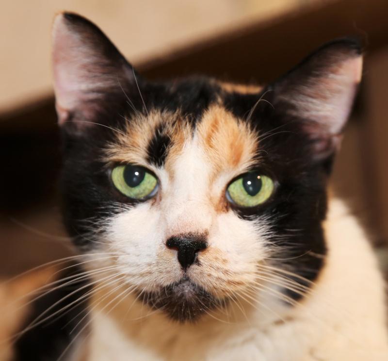 Parrainage des chats de Mme Angela Hx9a3517
