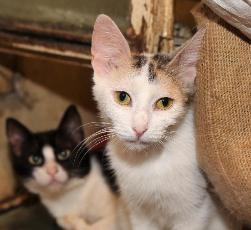 Parrainage des chats de Mme Angela Hx9a3518