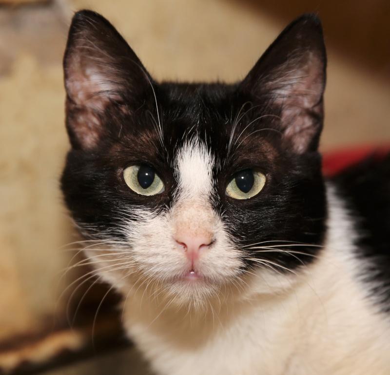 Parrainage des chats de Mme Angela Hx9a3519
