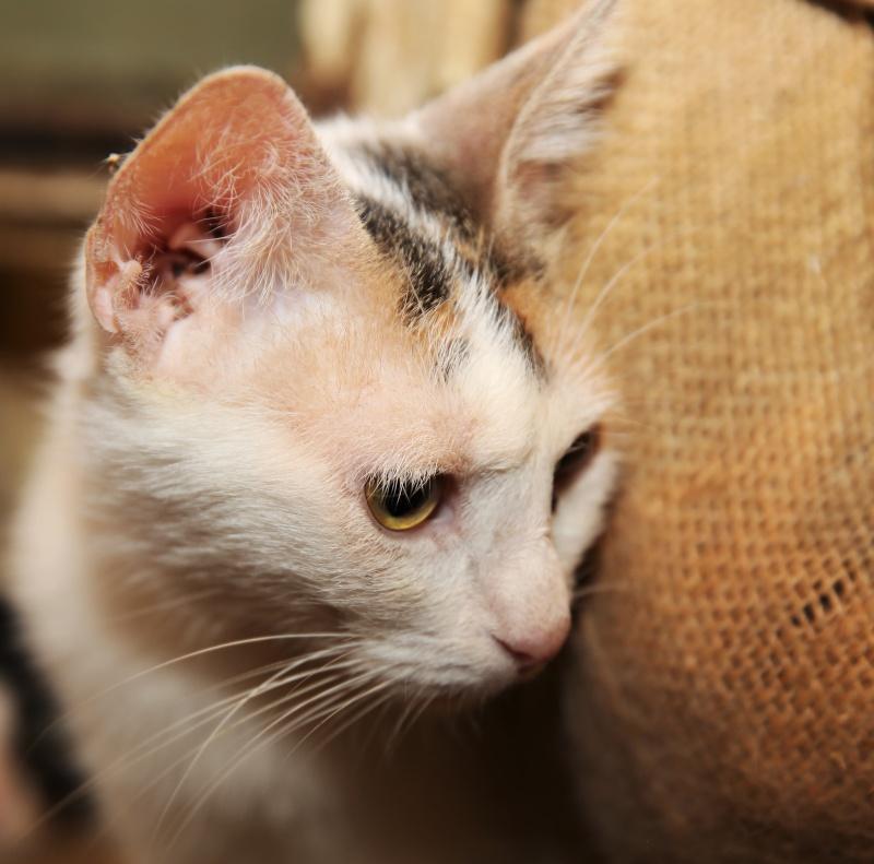 Parrainage des chats de Mme Angela Hx9a3520