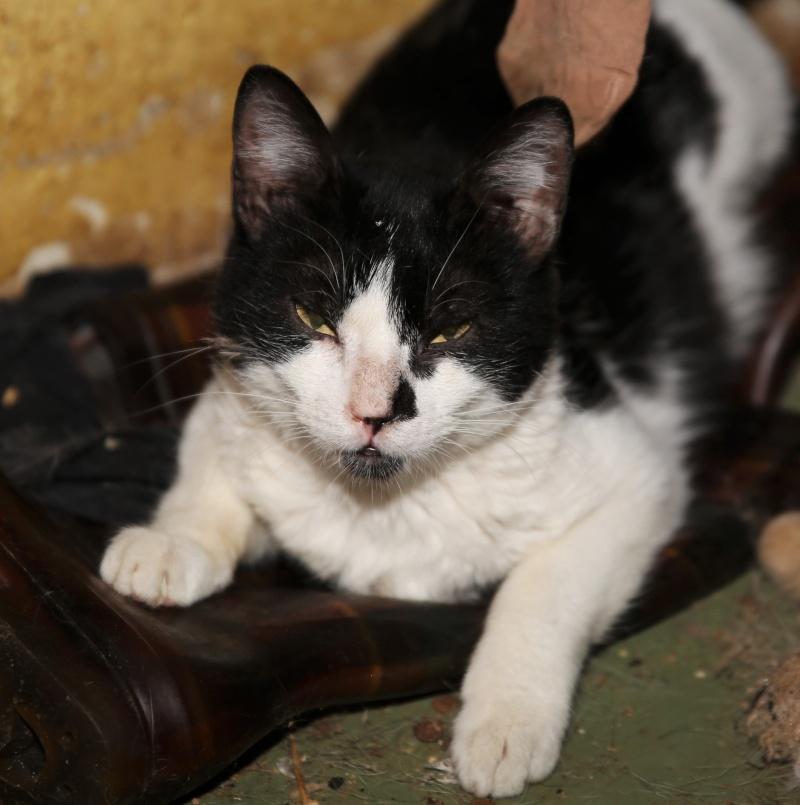 Parrainage des chats de Mme Angela Hx9a3522