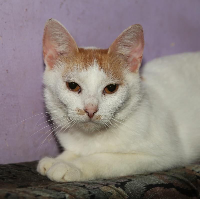 Parrainage des chats de Mme Angela Hx9a3523