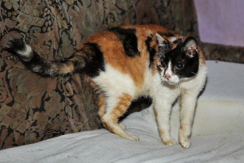 Parrainage des chats de Mme Angela Hx9a3524