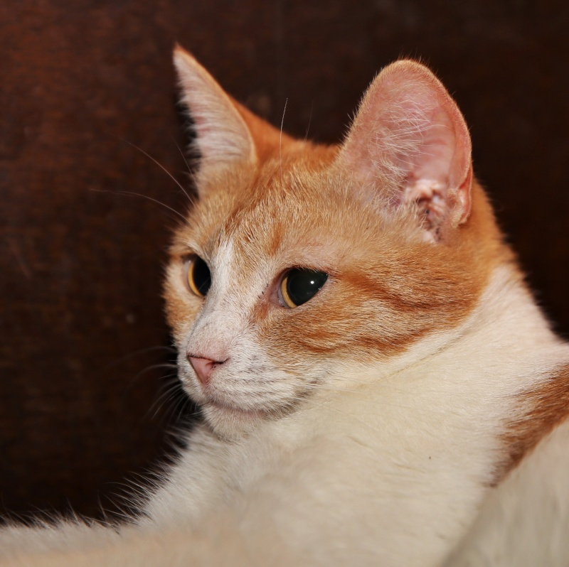 Parrainage des chats de Mme Angela Hx9a3527
