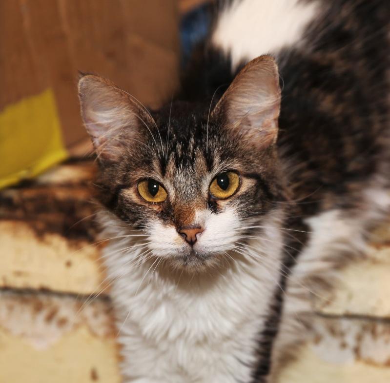 Parrainage des chats de Mme Angela Hx9a3528