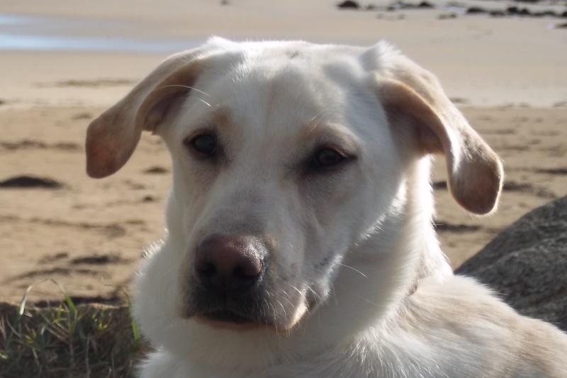 Voyager en Irlande avec son chien Shanti12
