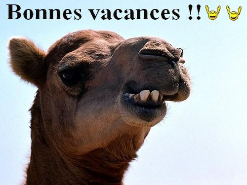 VapeDePartoutMemeEnEgypte est en vacance Chamea10