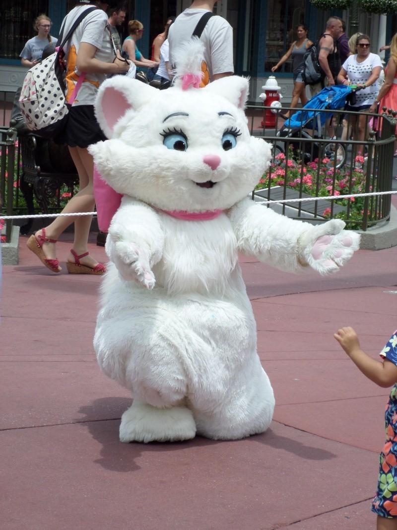 Disneymoon : Walt disney world & Disney cruise line mai 2015  - Page 3 Sam_1033