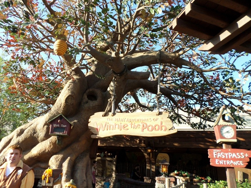 Disneymoon : Walt disney world & Disney cruise line mai 2015  - Page 4 Sam_1120