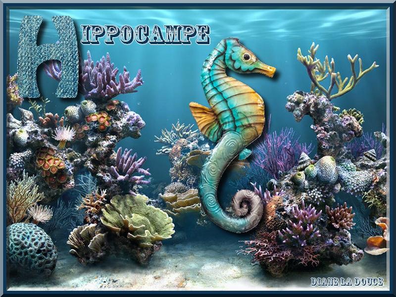 Alphabet animé H / Hyène-hippocampe Toplet40