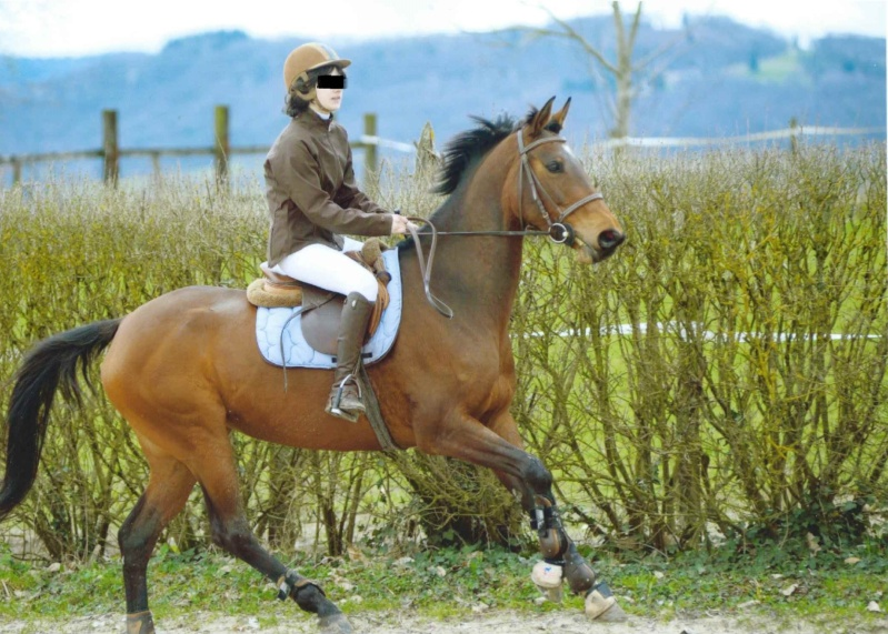 Non Stop d'Aveyron - jument anglo arabe 12 ans Non-st11