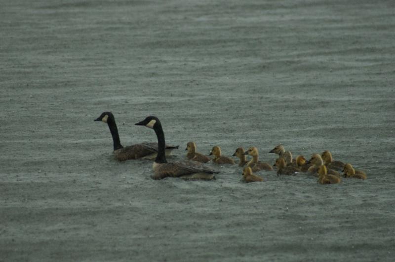 Belles familles.. Parc_d15